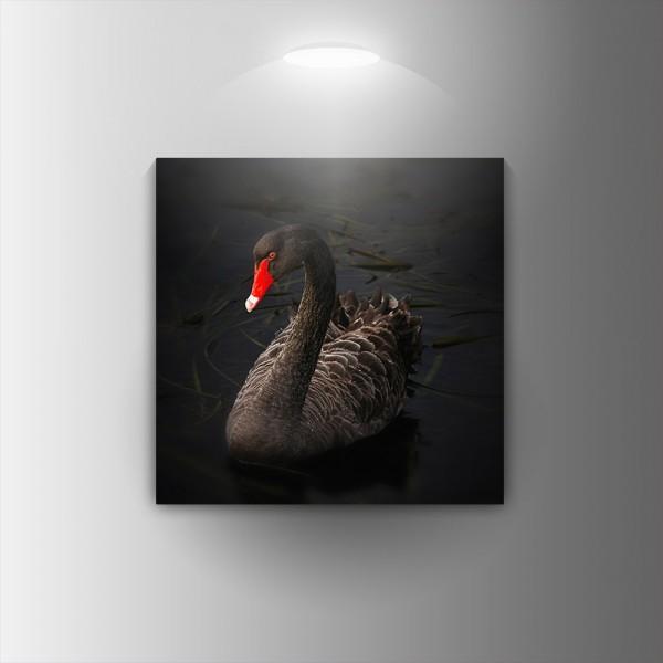 Картина-канава Черното пате