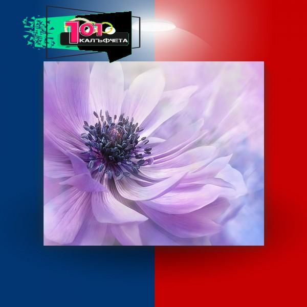 Картина-канава Лилаво цвете