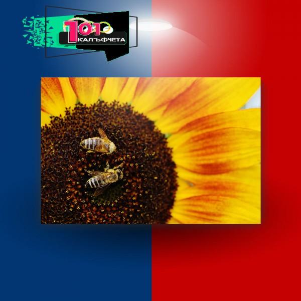 Картина-канава Пчели