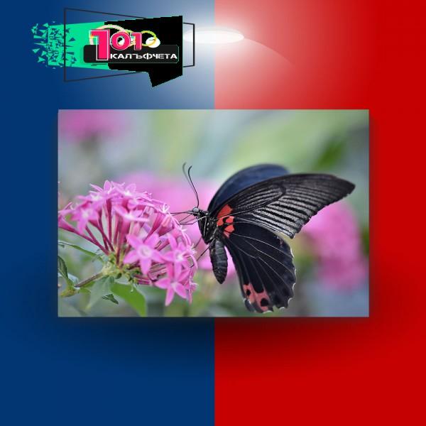 Картина-канава Пеперуда