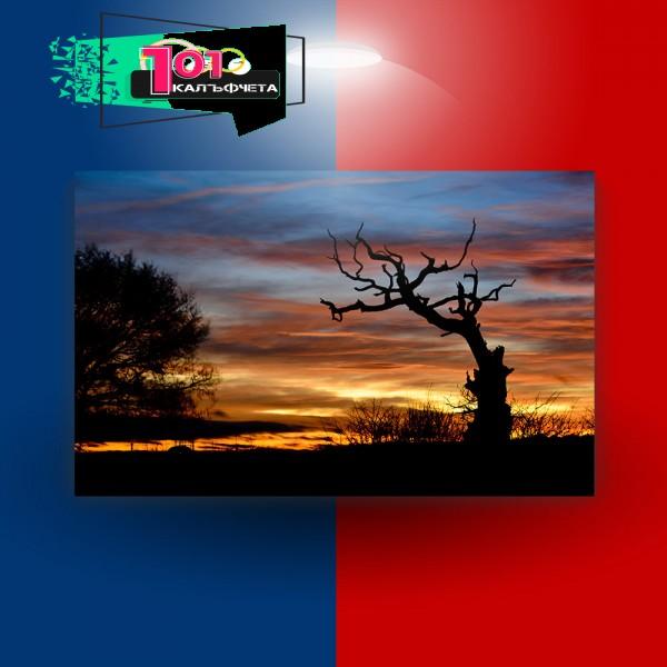 Картина-канава Залез и дървета
