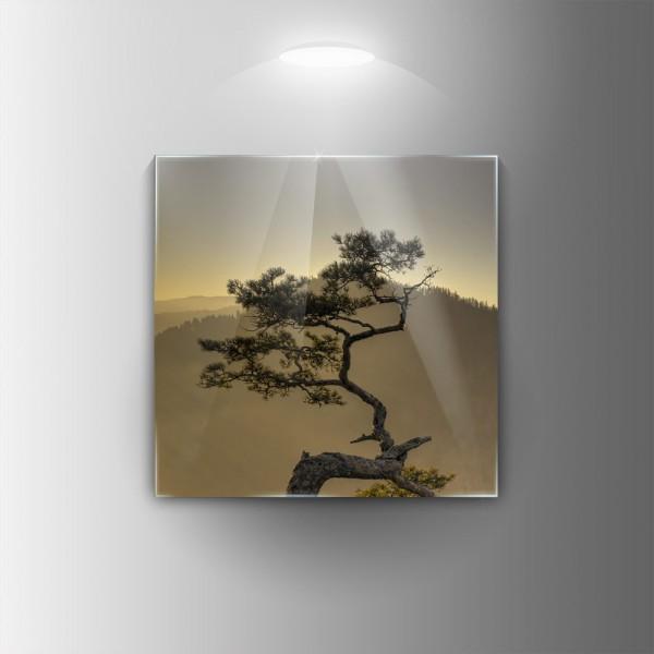 Картина на закалено стъкло Дърво