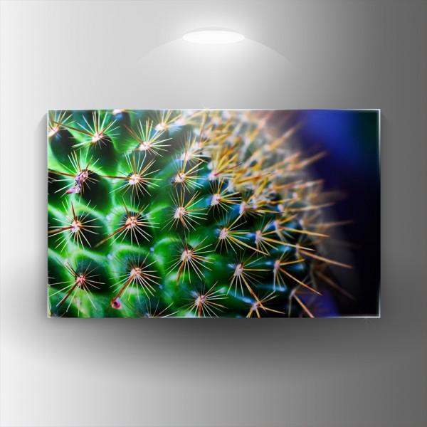 Картина на закалено стъкло Кактус