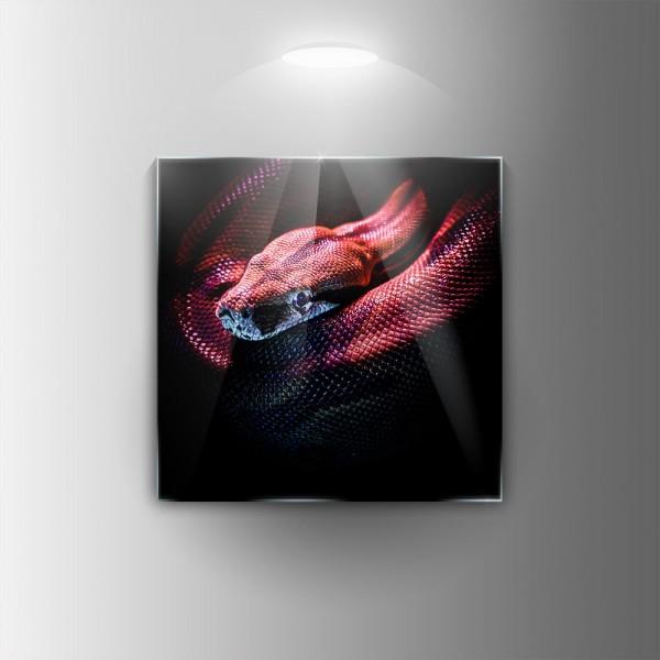 Картина на закалено стъкло Змия